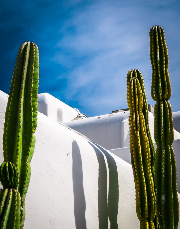 Cactus and stucco